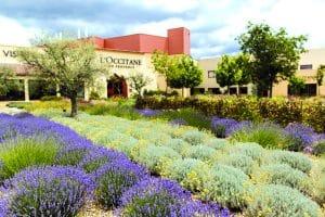 Jardin de L'Occitane en Provence